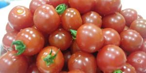 ミニトマトの収穫~年長・食育~